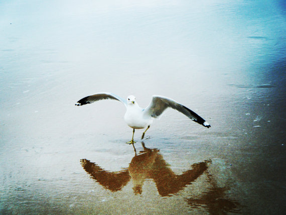 Reflection of a Friendly Seagull