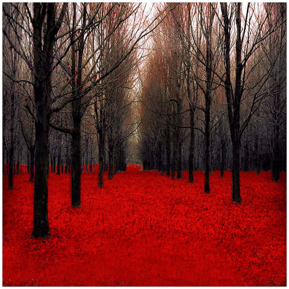 Black and red woodland forest