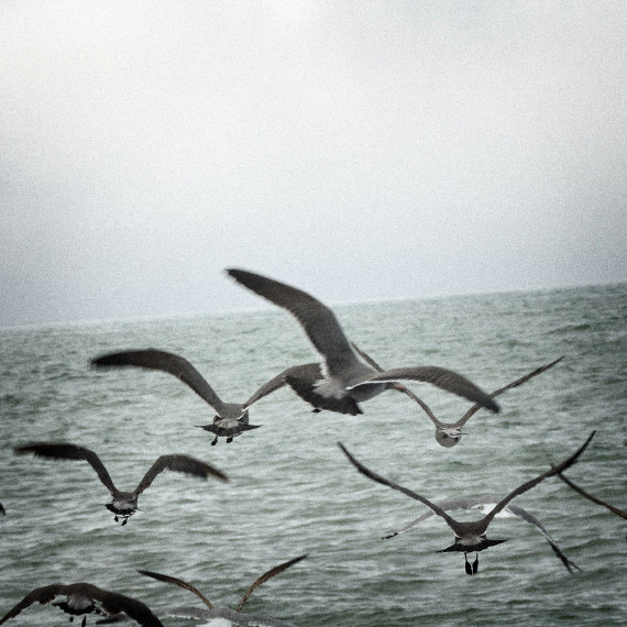 Flying Seagulls ocean