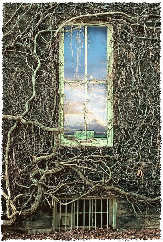 vines window twilight steampunk