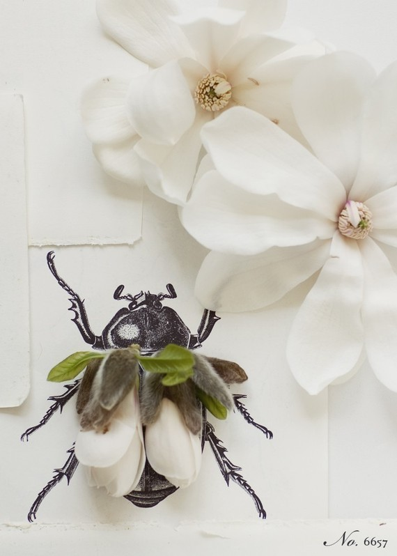 magnolia flowers bug drawing