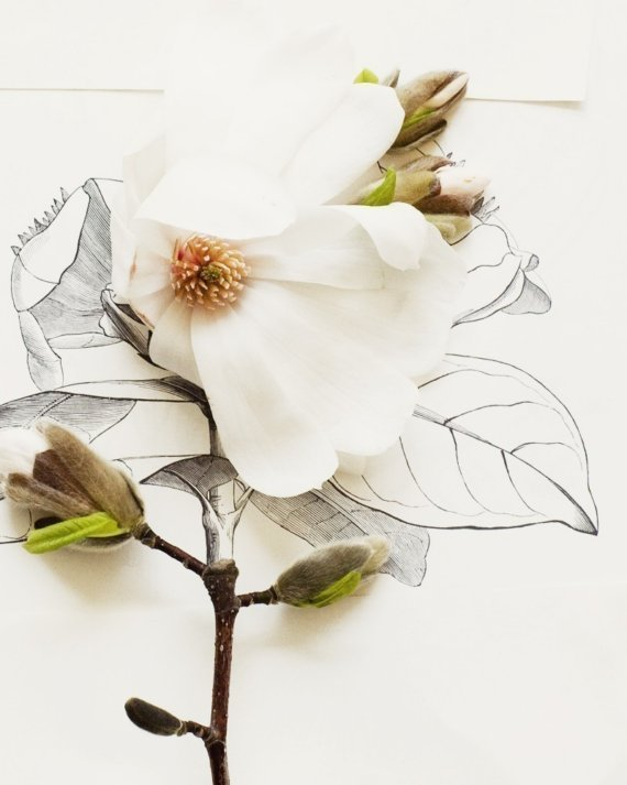 magnolia flowers drawing