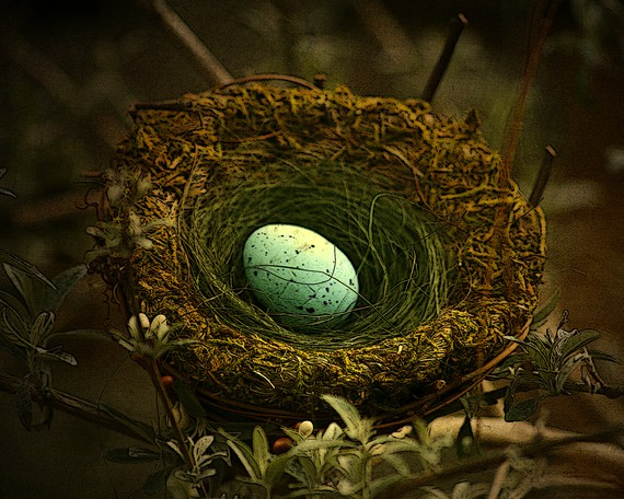 birdnest, blue egg