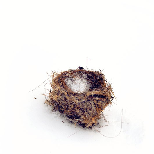 Birds Nest in the Snow