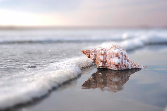 sea shell beach