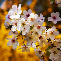 22 Beautiful Blossom Pictures