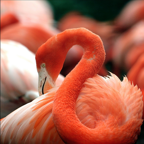 19 beautiful flamingo pictures