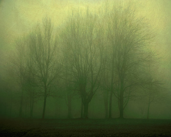 Early Trees in Fog