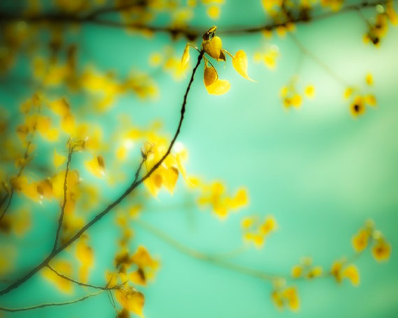 Dream a Little Dream yellow blossom tree branch