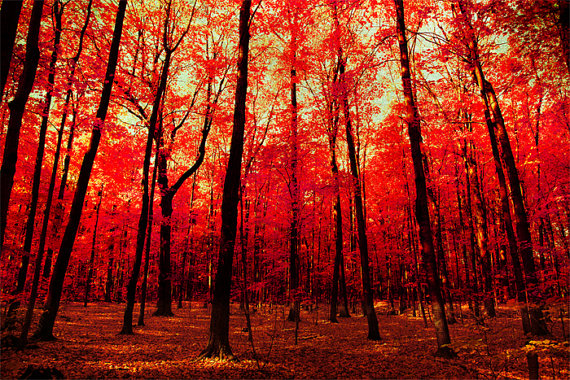 The True North red forest