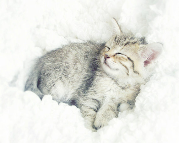 On Cloud Nine kitten