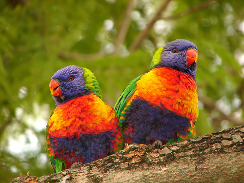 22 photos of brightly colored birds love birds 500x375