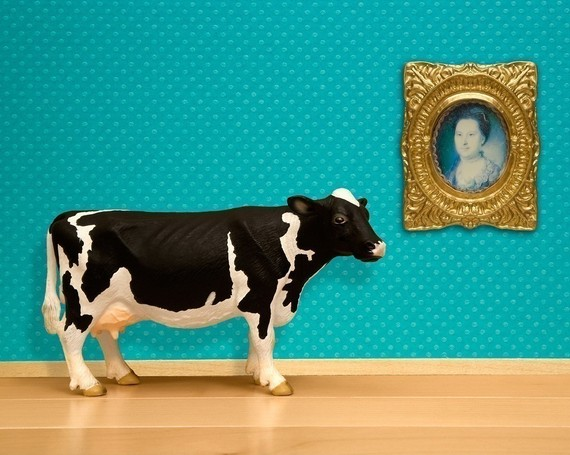 The Cultured Cow