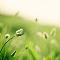 13 Great Pictures of Grass by Carolyn Cochrane