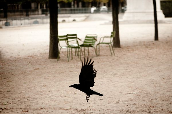 Birds at Great Cities - Paris
