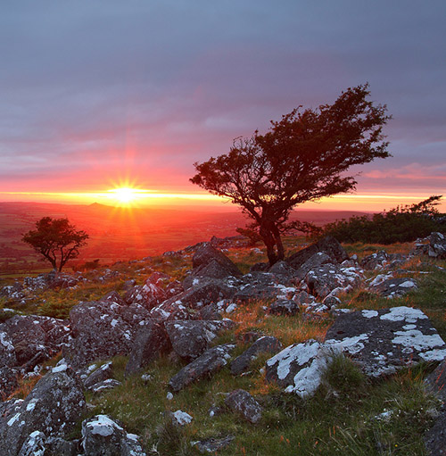 Trees on Dartmoor with stunning sunset on the horizon - Southwest England