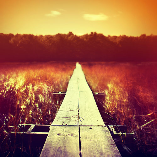 Long exposure image of a hand-made boardwalk extending over marsh with windswept wheat grass