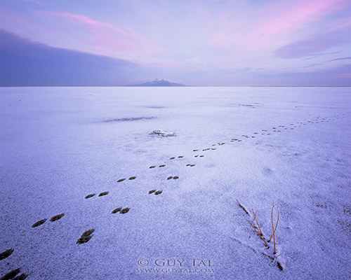 """Coyote Valentine"" by landscape photographer Guy Tal; blue hour image of coyote tracks in the snow"