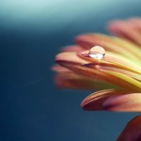 17 Lovely Macro Pictures by Coral Hall