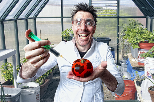 Professor Biff Wellington demonstrates the transfer of Mad Cow Disease to common garden tomatoes. Next he will try to transfer a whole cow. Once his research is complete he hopes to produce beef tomatoes.