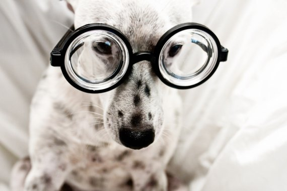 brainiac dog with glasses