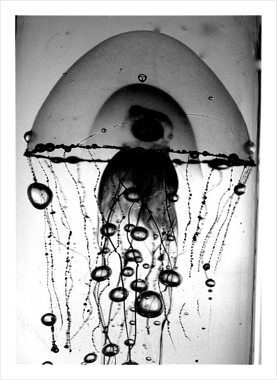Jellyfish Floating black and white