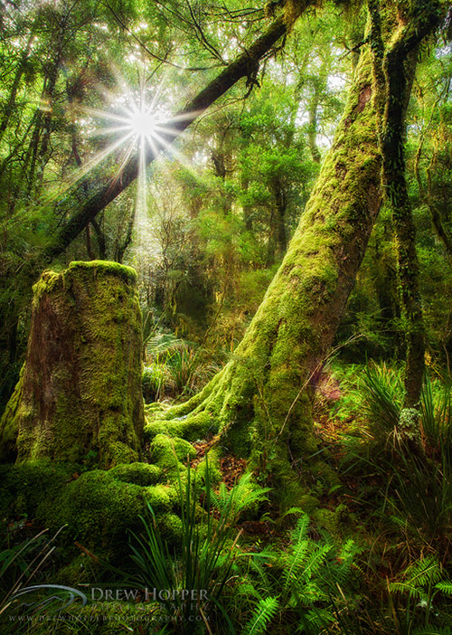 The mossy forest of New England National Park in Australia.