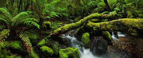 A small stream runs through a mossy forest, and under a log connecting both banks.