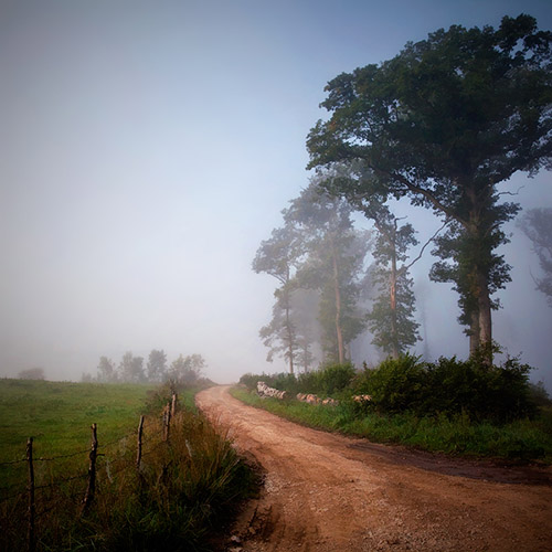 long, windy dirt road into the mist with tall trees along the side.