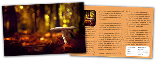 Portfolio of Bokeh page preview