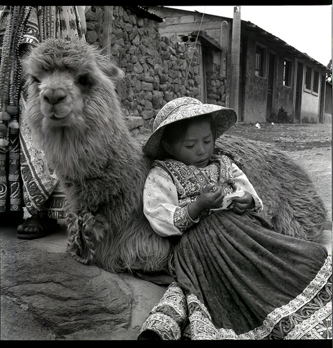 resting llama and girl