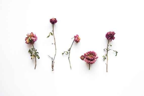 Dried Rose Collection