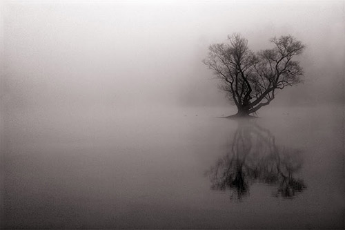 A lone tree grows in the water, shown in dense fog.