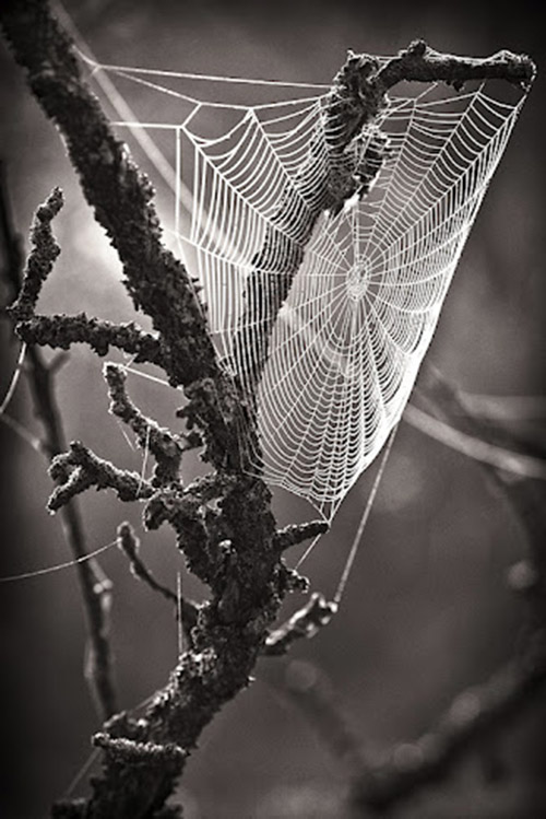 Intricate spider web woven into a barren tree branch.