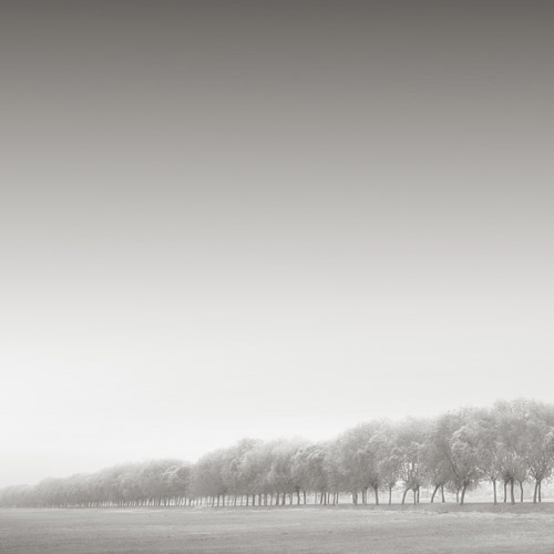 Treeline against a blank sky, fine art black and white photography.