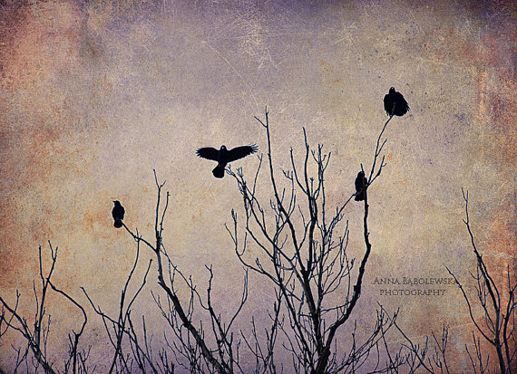 Crows on the high tree