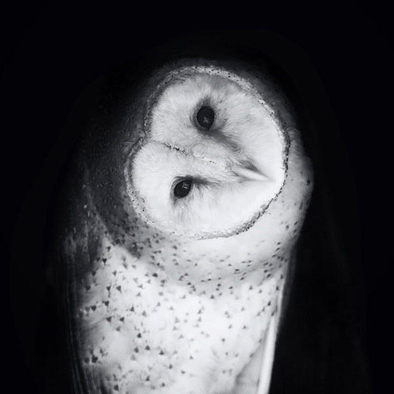 Barn Owl Photo Portrait - Hoo Are You