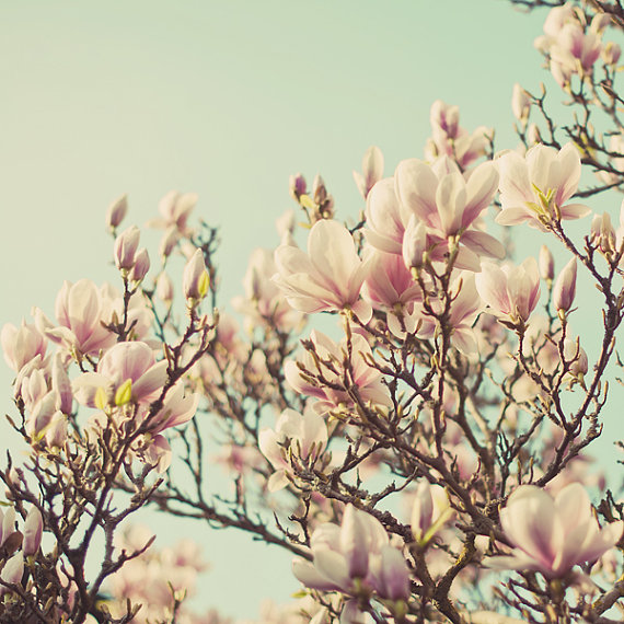 When I dream about spring magnolia