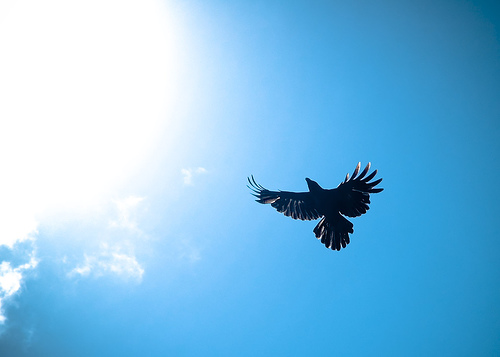 Crows - Towards the sun i fly, not as Icarus.