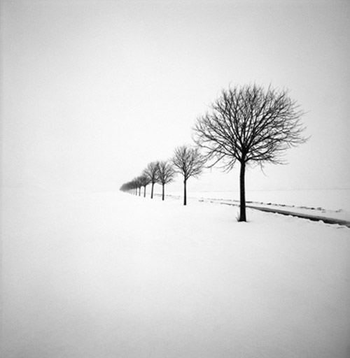 A row of bare trees in the snow, black and white photography by Hakan Strand