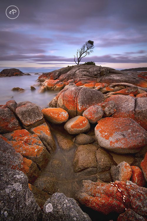 Binalong Bay Tree in Tasmania, Australia