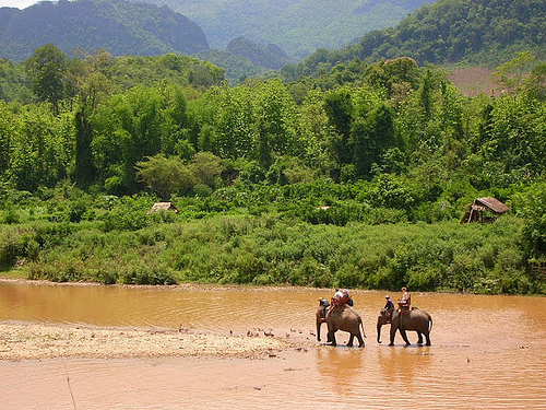 Elephant trekking, Laos by Mandala Travel