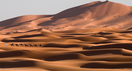 Camel Train on the Dunes by Martin Allen