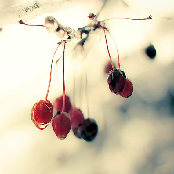 Icy encrusted berries