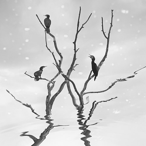 Birds resting on a bare tree reflected in water