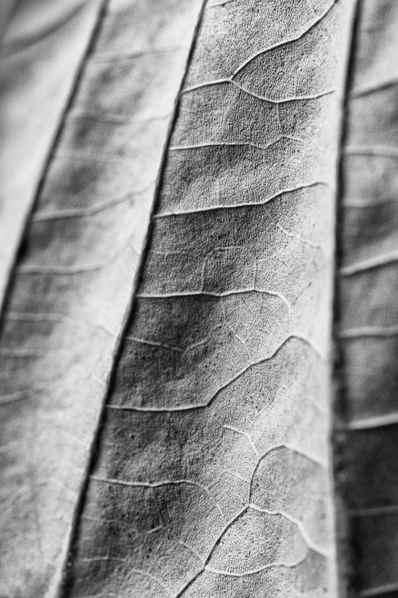 The Landscape of a Leaf