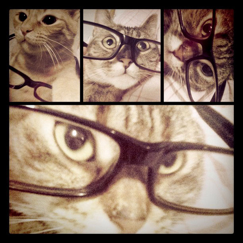 Smarty cat out takes.
