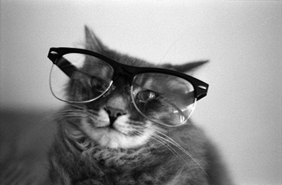 Black and White Photography, Cat wearing glasses