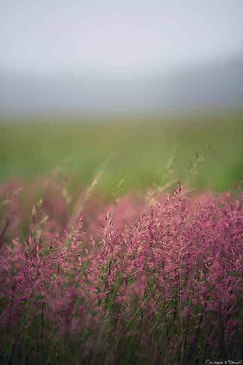 A shallow depth of field under overcast lighting can provide a painterly photograph.