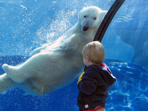 Kid and Kid polar bear
